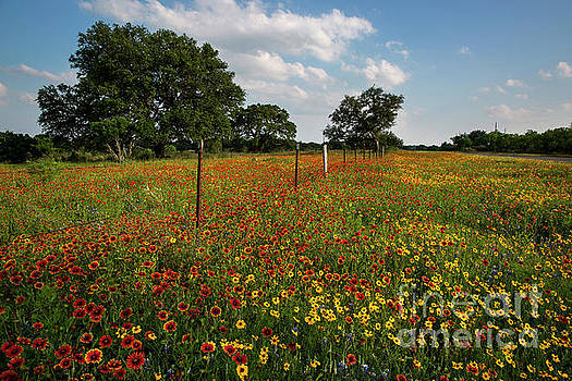 Herronstock Prints - Vivid colorful wildflower field next to a barb wire fence and Te