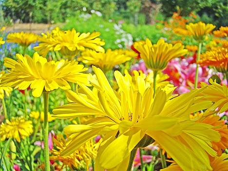 Baslee Troutman - Vivid Colorful Yellow Daisy Flowers Daisies Baslee Troutman