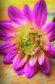 Vivid Dahlia by Garry Gay