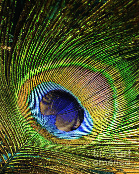 Vivid Feather by Joe Geraci