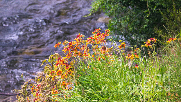 Omaste Witkowski - Vivid Journeys Methow Valley Flowers by Omashte