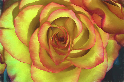 Vivid Rose by John Roach