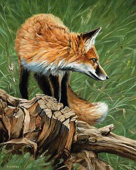 Vixen by Peter Eades