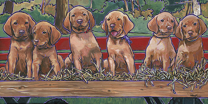 Vizsla Pups by Nadi Spencer