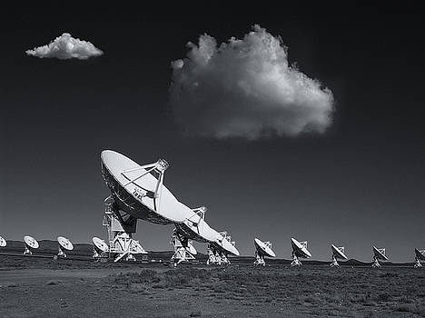 Vla by Carolyn Dalessandro