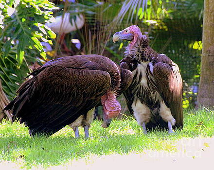 Vultures by Lennie Malvone
