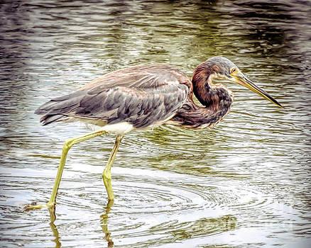 Wading Birds - Tricolored Heron by Kerri Farley