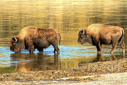 Adam Jewell - Wading Into The Yellowstone