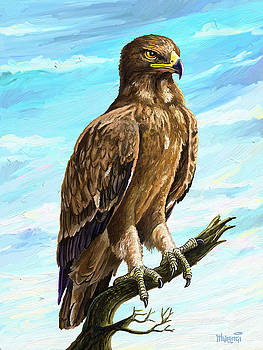 Wahlberg's Eagle by Anthony Mwangi