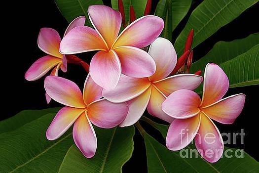 Wailua Sweet Love Texture by Sharon Mau
