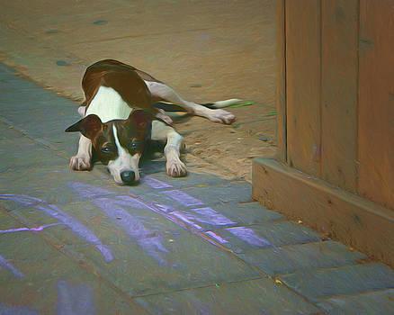 Nikolyn McDonald - Waiting - Dog