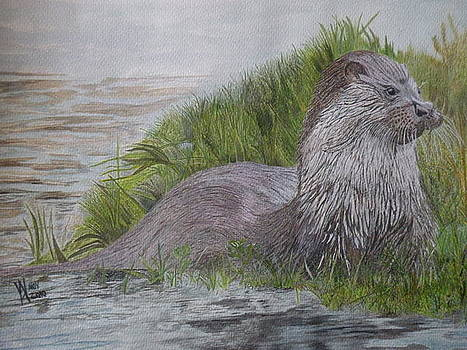Waiting for Otter by Alan Webb
