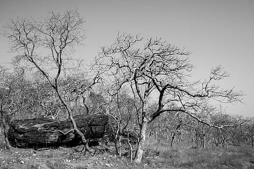 Waiting for spring by Hitendra SINKAR