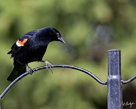 Waiting For Suet by Phill Doherty