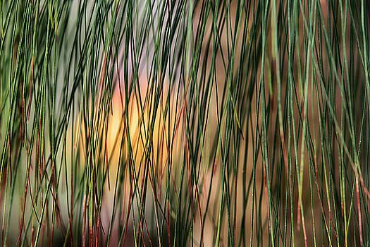 Dawn J Benko - Waiting for the Sun