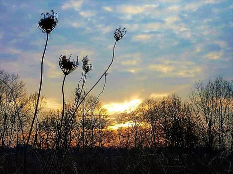 Waiting for the sun by Gary Edward Jennings