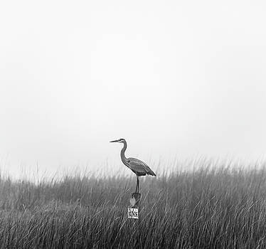 Waiting on the Fog to Clear by Donnie Whitaker