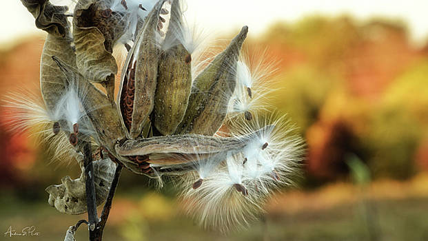 Waiting on the Wind by Andrea Platt
