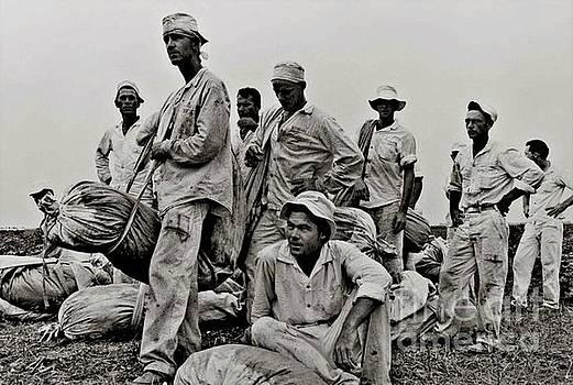 Peter Gumaer Ogden - Waiting to Weigh Cotton Ramsey Prison Farm Huntsville Texas 1968