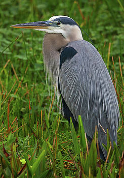 Wakodahatchee Wetlands Bird by Juergen Roth