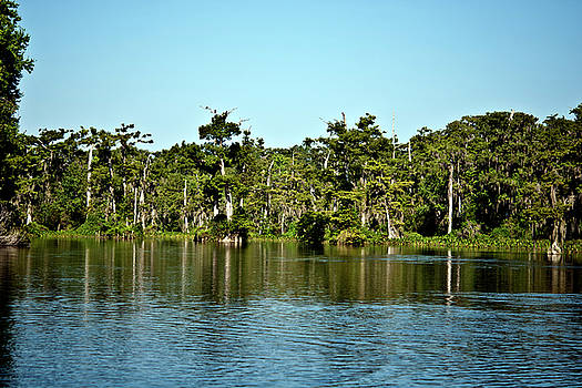 Wakulla River The Real Florida by Frank Feliciano