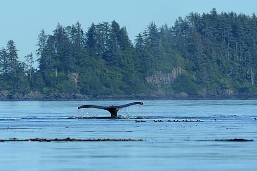 Wale Watch by Christian Heeb