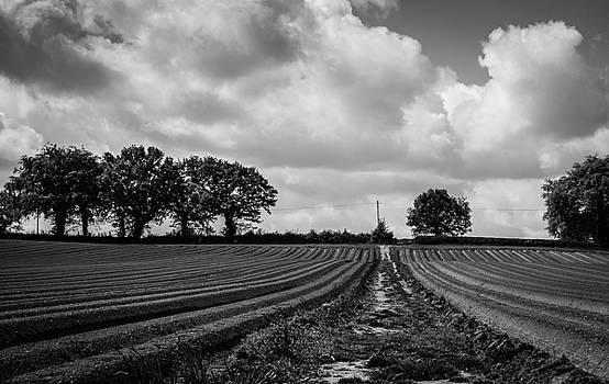 Walk Across by Nigel Spencer