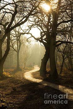 Walk in a misty wood. by Andy Bradley