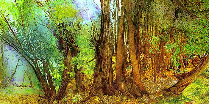 Walk In The Wood by Anne Weirich