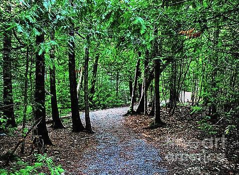 Gary Wonning - Walk in the woodlands