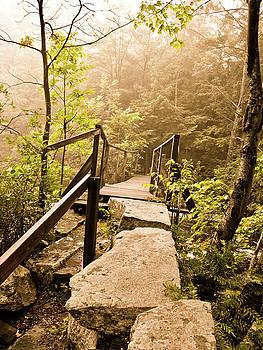 Walk in the woods by Cathy Hacker