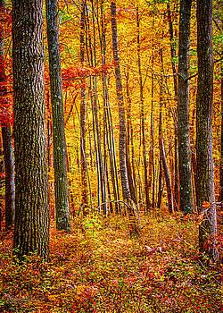 LeeAnn McLaneGoetz McLaneGoetzStudioLLCcom - Walk in the woods Huron County Nature Center