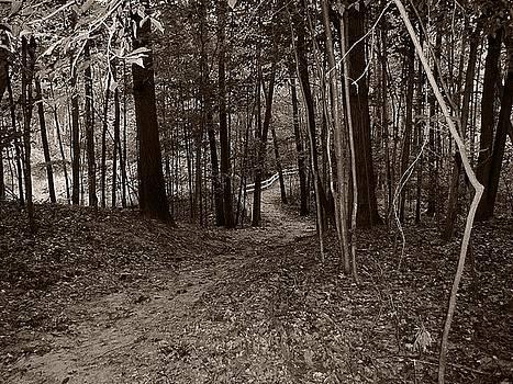 Scott Hovind - Walk in the Woods
