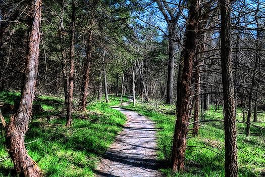 Walk In The Woods by Steve ODonnell