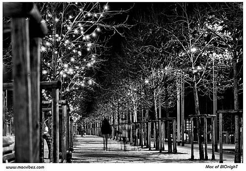 Walk Of Lights by Mac of BIOnighT