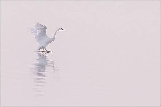 Walk on Water by Allen Ahner
