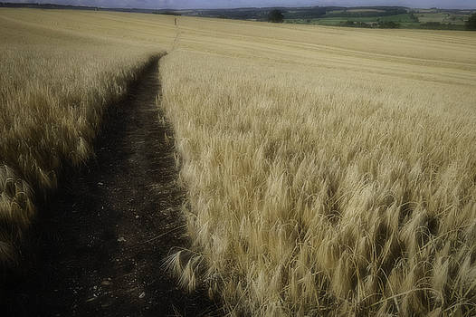 Walk Softly by Wendy Chapman