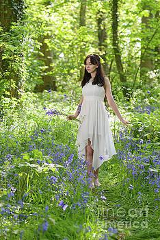 Walk Through The Bluebells by Amanda Elwell