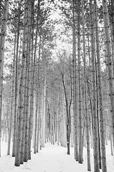 Walk Through the Forest by Samantha Boehnke
