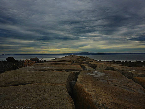 Walk to the Sea by Teri Ridlon