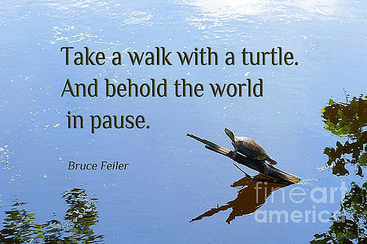 Walk with a Turtle by Robin Clifton