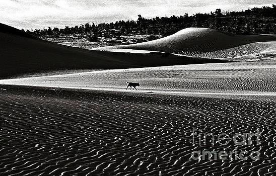Walking alone through the desert of life by Silva Wischeropp