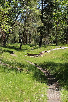 Walking at Fish Hatchery by Marie Neder