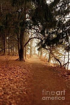 Walking in the Maine Woods by Elizabeth Dow