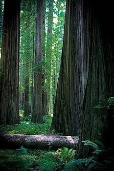 Jonathan Hansen - Walking in the Redwoods