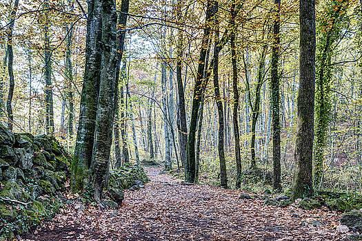 Walking into Jordan Beech Wood, Catalonia by Marc Garrido