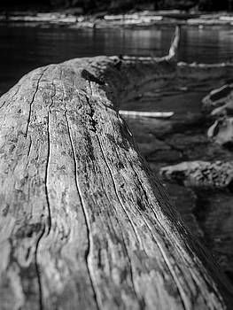 Walking on a Log by Trance Blackman