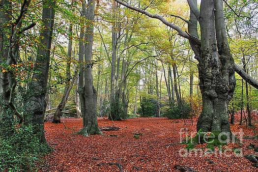Walking Through Epping Forest by Vicki Spindler