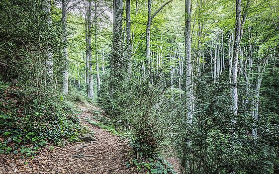 Walking Through La Grevolosa by Marc Garrido
