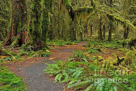 Adam Jewell - Walking Through The Greens